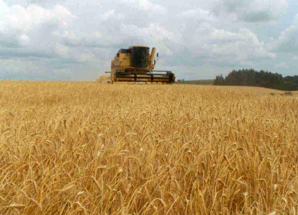 6 coisas que você precisa saber sobre a agricultura brasileira