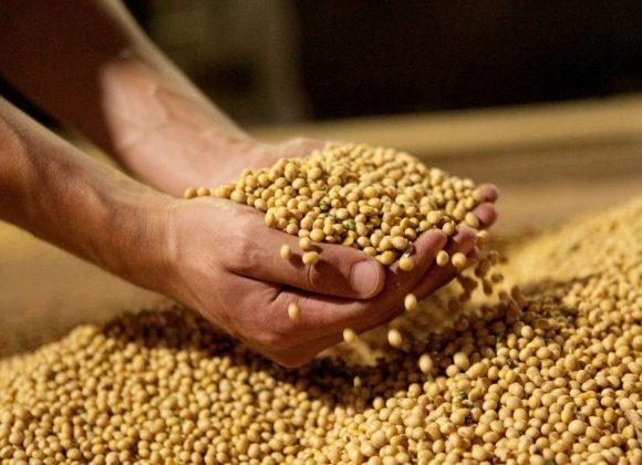 Brasil vai ultrapassar EUA como 3º maior fornecedor de soja do mundo, diz FAO