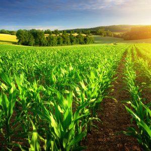 Agricultura eleva patamar da economia brasileira