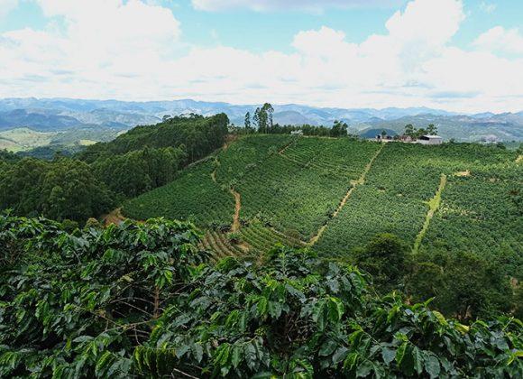 9 dicas para transformar a produção de café comum em café especial